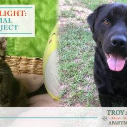 Troy Animal Rescue Projects