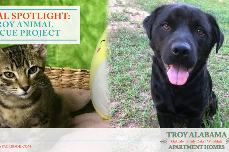 Local Spotlight: Troy Animal Rescue Project
